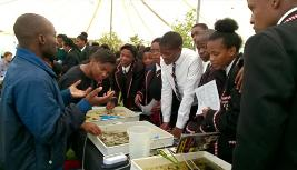 Qawekazi Mkabile and David Gwapedza of the  (IWR) explain how insects indicate water quality.
